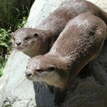 Otter Zoo Paris