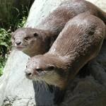 Otter Zoo Paris