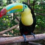 Tukan Zoo Vincennes Paris
