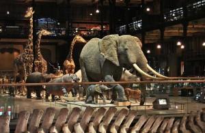Naturkundemuseum Paris