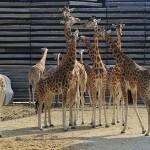 Zoo Vincennes Paris mit Kindern