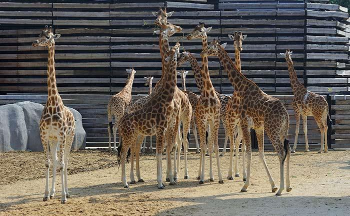 Zoo de Vincennes Paris