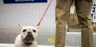 Hund Paris Metro