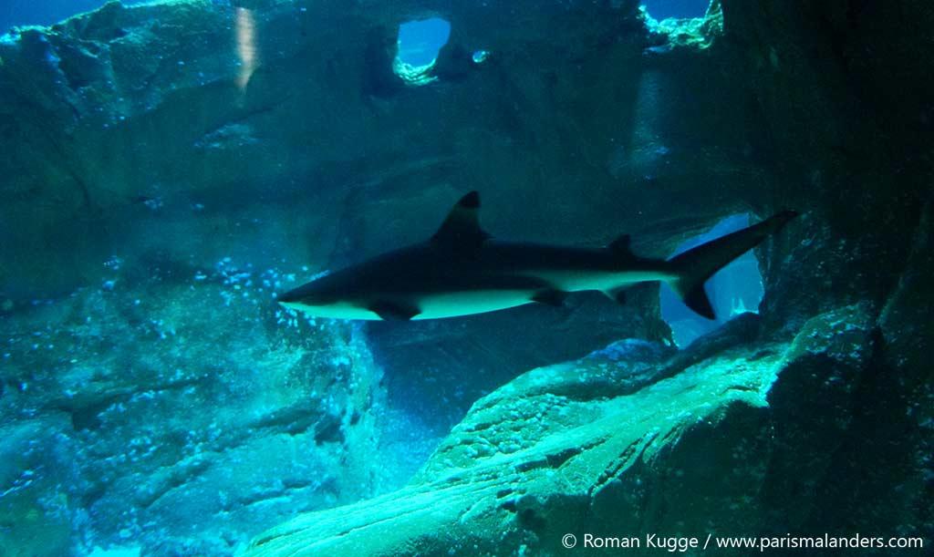 Aquarium Paris Hai