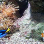Aquarium-Paris-Nemo