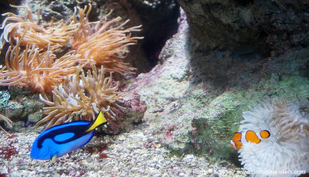 Aquarium Paris Nemo