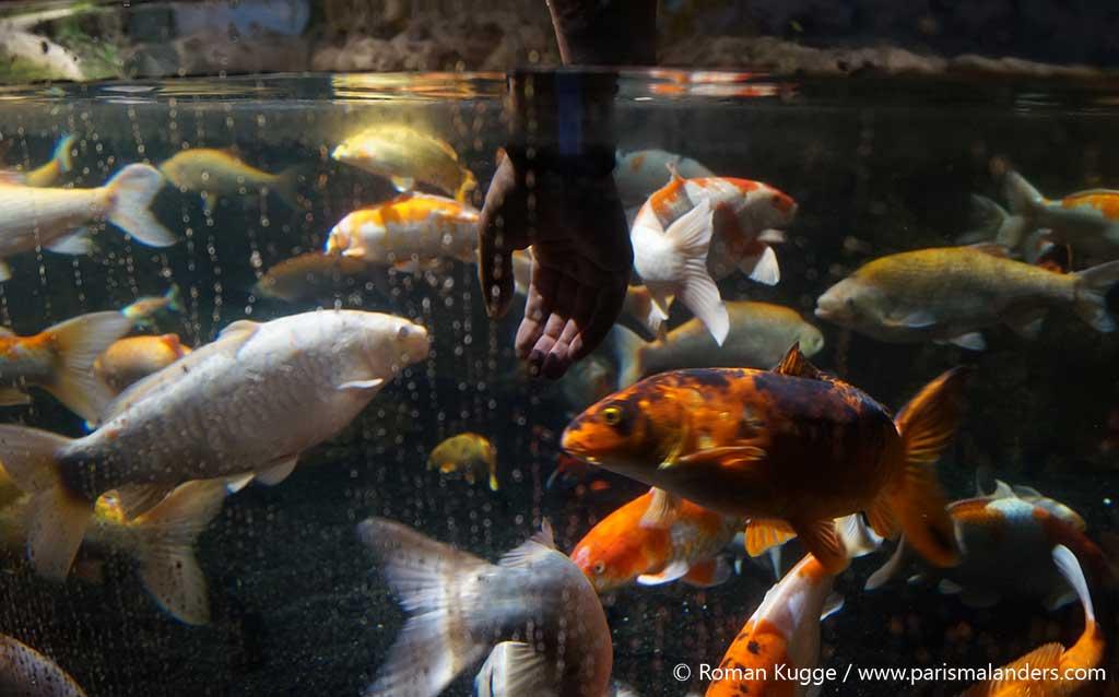 Streichel Becken Aquarium Paris