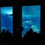 Aquarium Paris Val Europe Sea Life