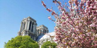 Notre Dame in Paris Kirschbäume